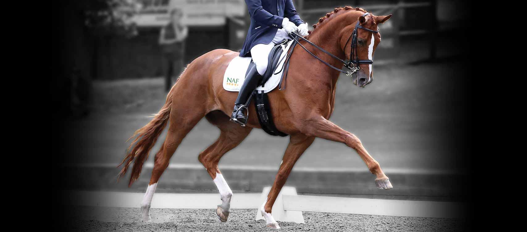 Biedt u optimaal geconcentreerde brokjes voor het optimaal in conditie houden van uw paard.