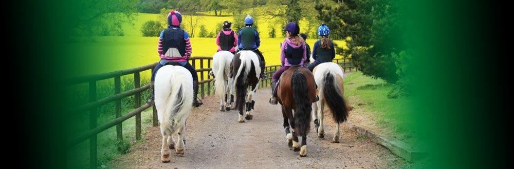 Ons doel is om je paard de beste keuzes te bieden zoals de natuur het heeft bedoeld
