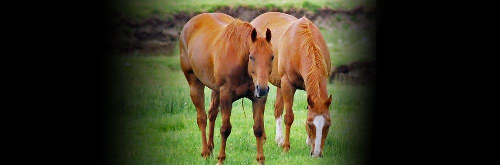 Ons doel is om het evenwicht te herstellen in uw paard