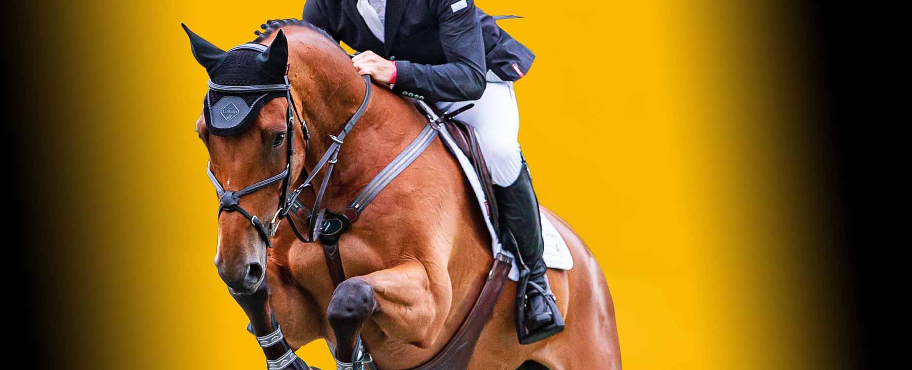 Ons doel is toegevoegde waarde te creëren voor uw sportpaard.