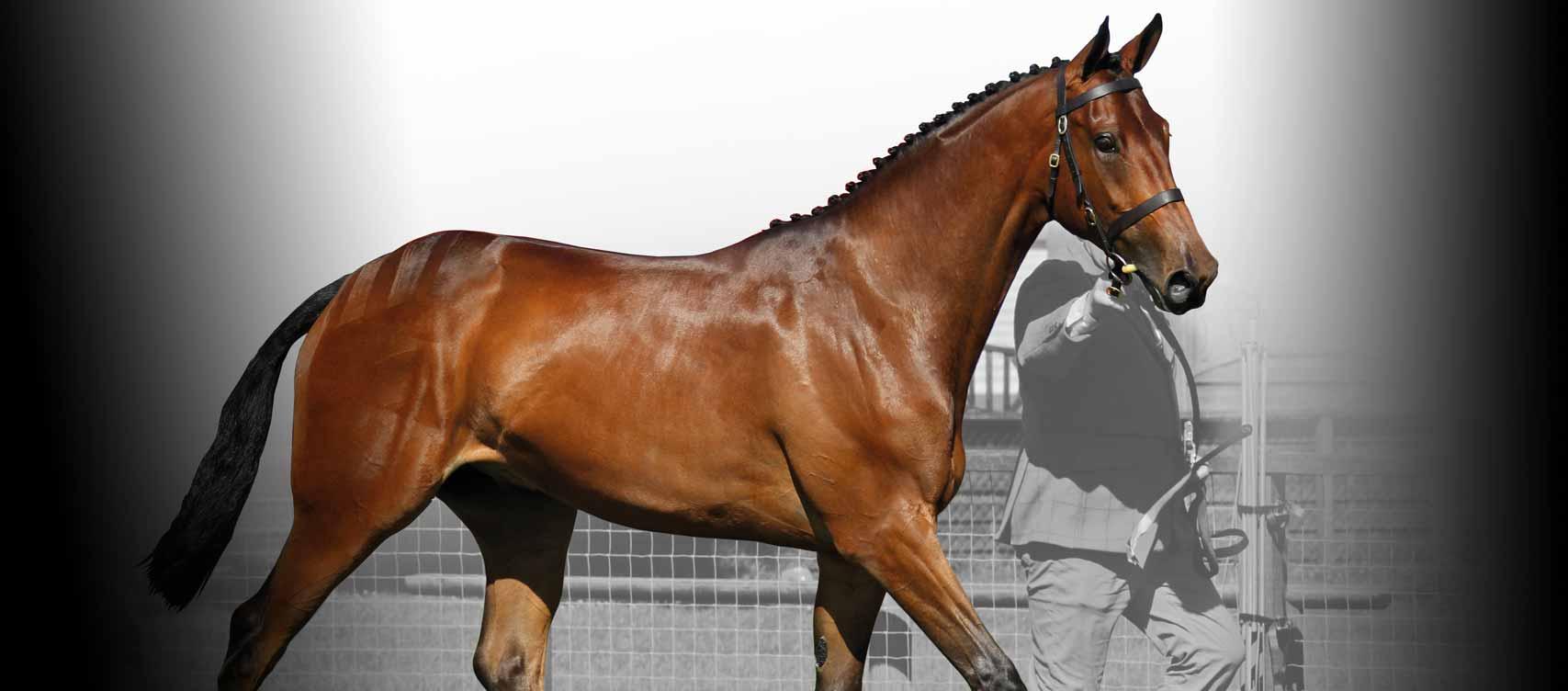 Ons doel is om u te helpen uw paard  zijn huidconditie te onderhouden