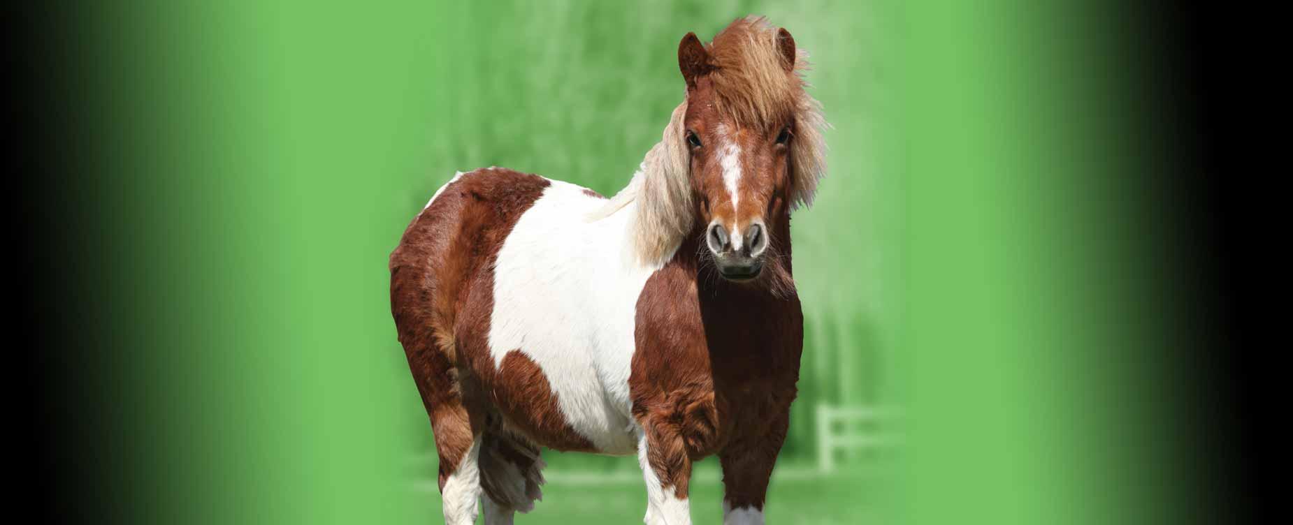 Ons doel is om de levensstijl van uw paard te behouden waar mogelijk