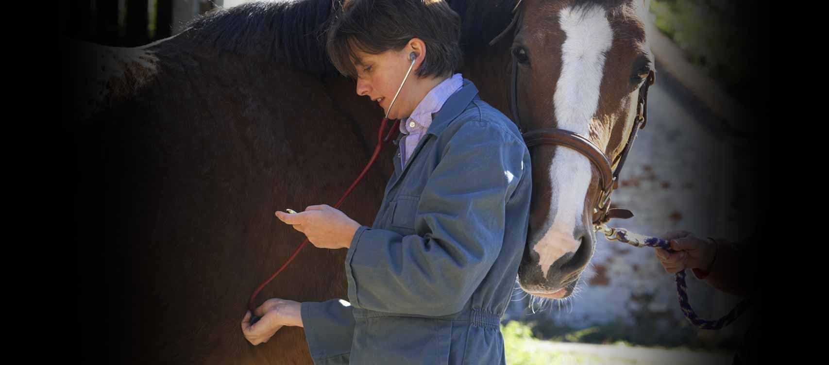 Ons doel is om extra ondersteuning te bieden voor je paard als hij het het hardst nodig heeft