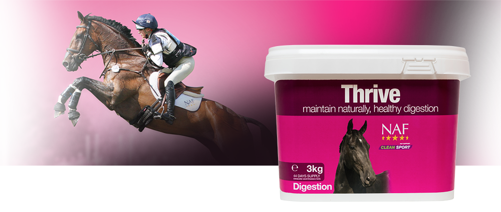 Thrive | Equine Supplements | Supplements for Horses