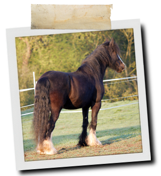 in the Pink Powder | Equine Supplements | Supplements for Horses
